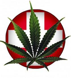 cannabis blad ovanpå rund pin med röd bakgrund och med fett vitt kors